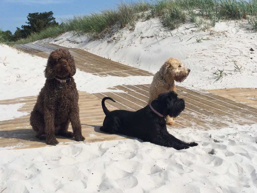 The Hounds of Falsterbo