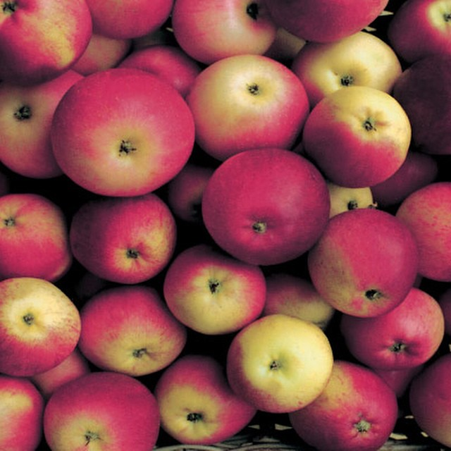 What to do with all those apples? Why not try pressing them and making your own fresh #applejuice Jez from the #market garden tells us how from @daylesfordfarm ???
