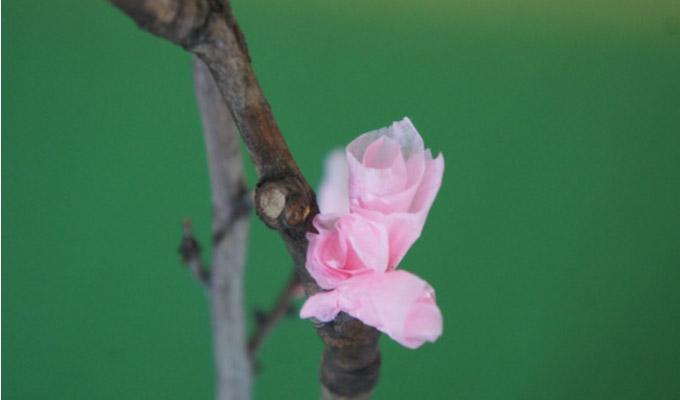 Nanny-Anitas-Blossom1