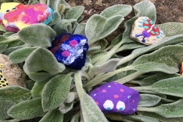 Pet rocks: The easiest pets to look after