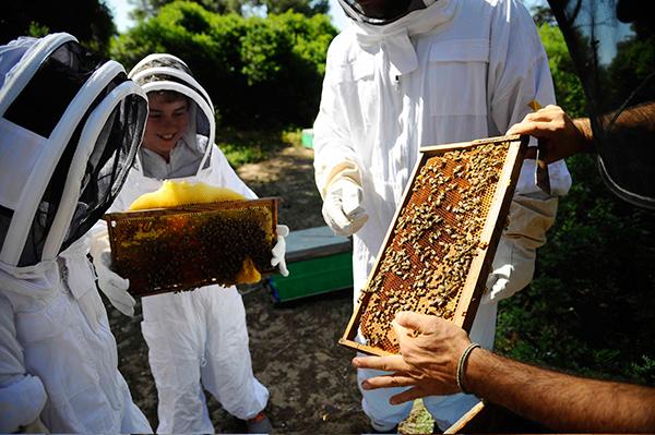 beekeeping-in-halkidiki