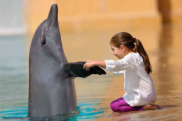 dolphin-at-atlantis-the-palm-dubai