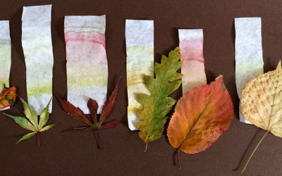 Leaf Chromatography Science Experiment