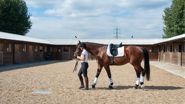 Horse Riding In London 14 Best Riding Schools For All
