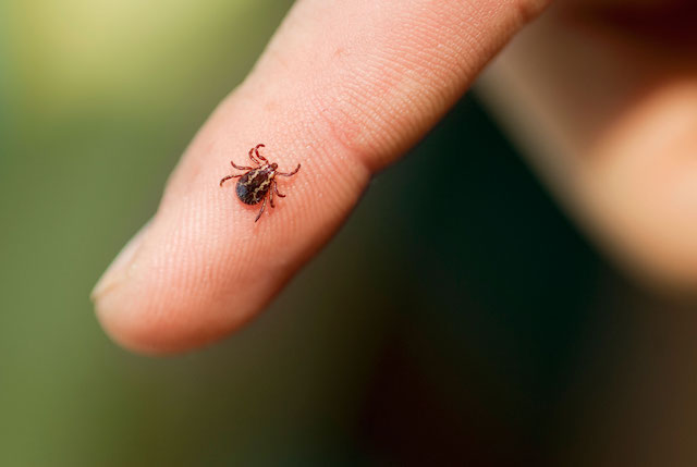 02-13-things-ticks-wont-tell-you-smaller-than-you-think