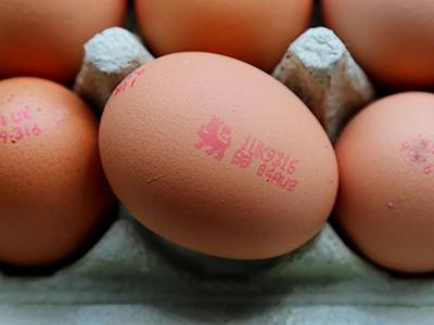 british-lion-egg