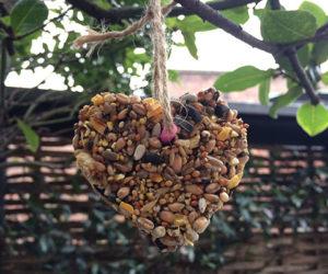 DIY birdseed feeder