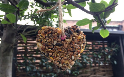 DIY birdseed feeder