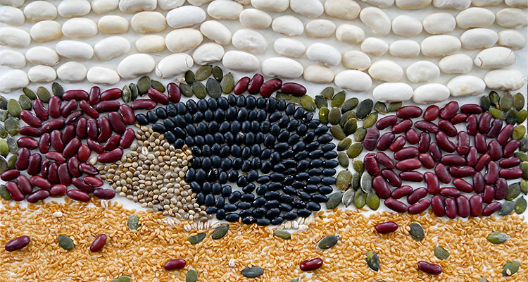 Animal Seed Collage