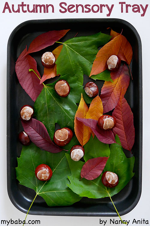 Autumn sensory tray filled with leaves and conkers for babies and toddlers to explore.