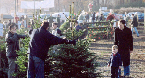 Where To Go In And Around London To Pick Your Own Christmas Tree
