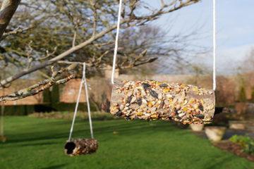 loo roll bird feeder