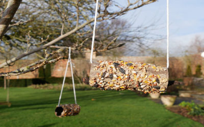 loo roll bird feeder