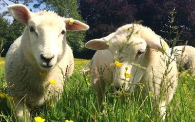 Farm Stays UK