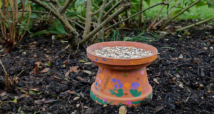 plant pot bird feeder