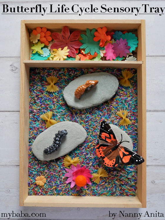 Butterfly life cycle sensory tray