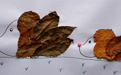 leafy hedgehog pictures